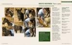 4-El-método-Masterson.-Ejercicios-y-técnicas-para-mejorar-el-rendimiento-del-caballo-978-84-7902-998-2