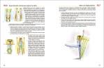 7-Acondicionamiento-fisico-para-la-danza-978-84-16676-86-6