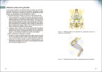 6-Los-secretos-funcionales-de-la-pelvis.-Un-enfoque-practico-para-el-yoga-978-84-16676-89-7